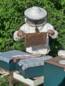 beekeeper-985082